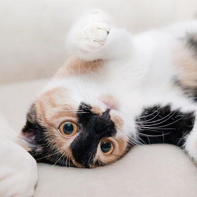 Tips tegen kattenpis