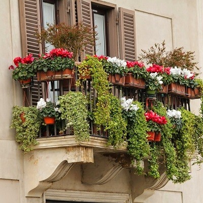 Tips mooie tuin