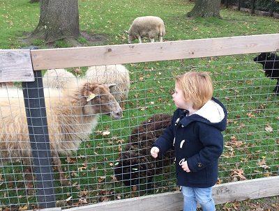 Parkhoeve Breda Noord, Kinderboerderij Breda